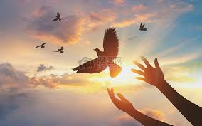 Hope to fly Simplicity, creativity, concept, flying, hope, dove ...